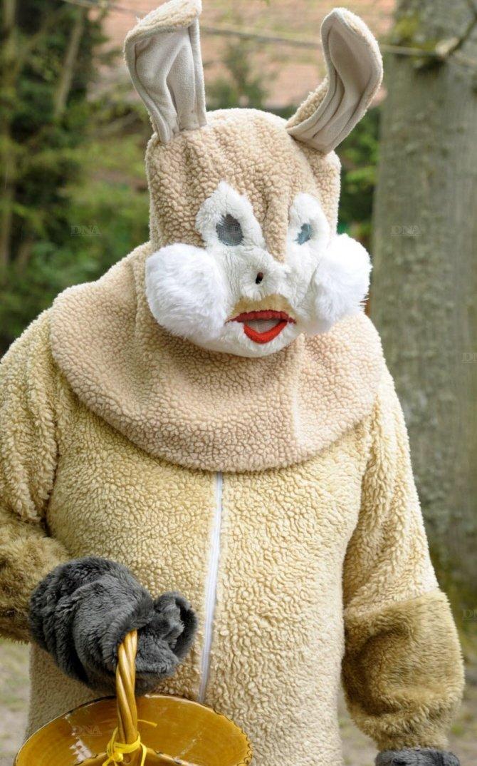 le-vrai-lapin-de-paques-une-belle-bete-qui-mesure-1-95-metre-photo-dna-franck-kobi (2)